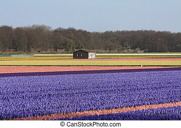 Shed in a flower field - Small storage shed in the middle of...