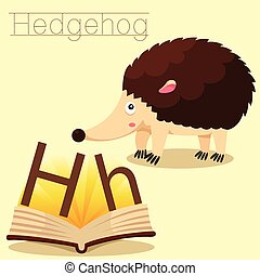 Illustrator of H for Hedgehog vocab