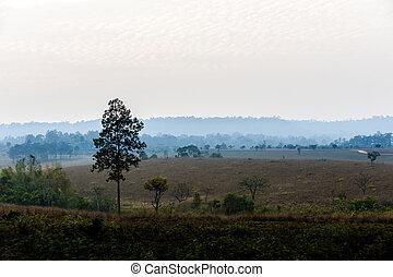 savanna Field in summer season.