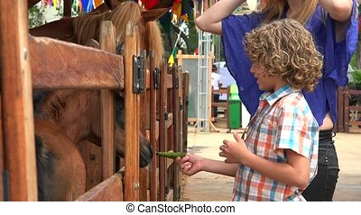 Young Boy Feeding Horse