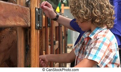 Boy Afraid Of Horse