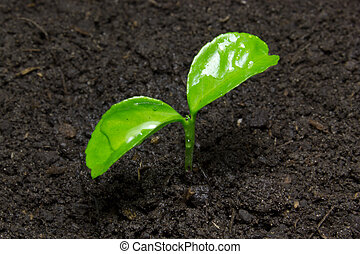 Young green sprout on the soil.