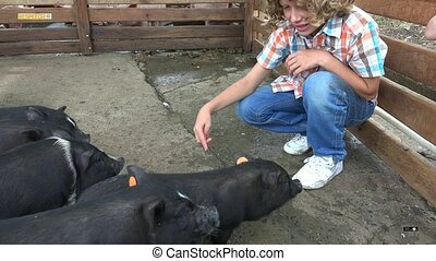 Boy At Pig Farm