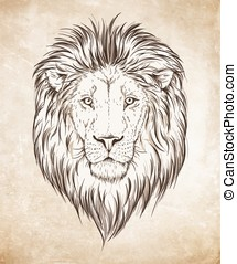 Lion head vector illustration - Lion head graphic over...