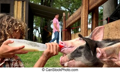 Boy Feeding Milk To Pigs