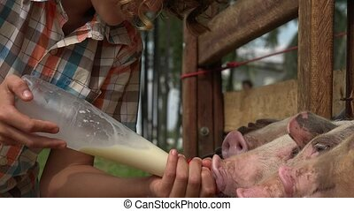 Feeding Pigs At Farm