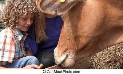 Feeding Cow At Farm