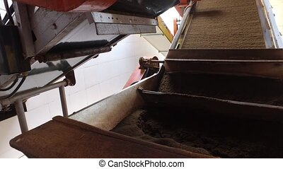 black tea moving on machine conveyor at factory -...