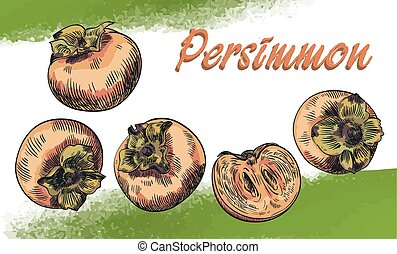 persimmon sketches set - hand drawn colored sketches of...
