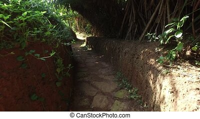 road or path through Sri Lanka forest - agriculture, farming...