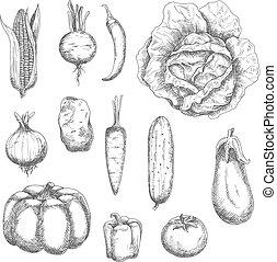 Retro sketches of garden vegetables
