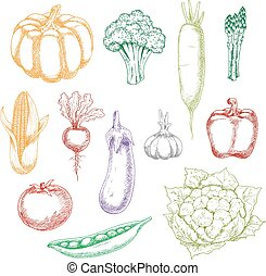 Fresh harvested whole vegetables sketches - Fresh harvested...