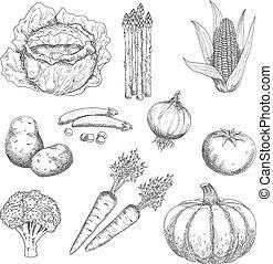 Ripe farm vegetables engraving sketches - Farm vegetables...