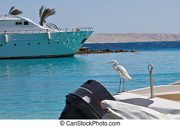 Heron on a boat