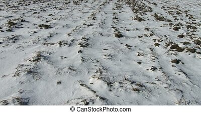 Uncultivated fields in organic farm in winter in Canada