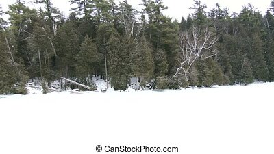 Frozen lake in Canadian Park - Frozen lake during snowfall...