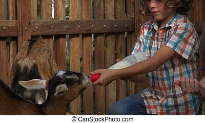 Feeding Goats At Farm