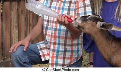 Hungry Goat Sucking Milk