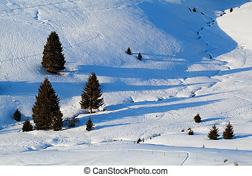 spruce trees in snowy hills, Baden-Wurttemberg, Germany