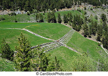 Grassy pastures on the mountain slope - Green grassland with...