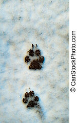 dog footprints in the snow - styled dog or folf animal...