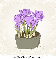 crocus in the pot - Greeting card with hand drawn crocus...