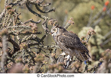 Great Horned Owl - a great horned owl in the desert