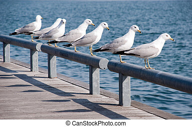 Curious gulls looking at you