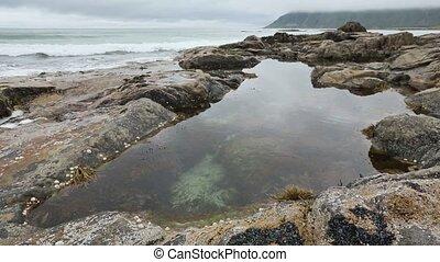 Lofoten Sea Coast and Pool with Alg - Lofoten rocky coast,...