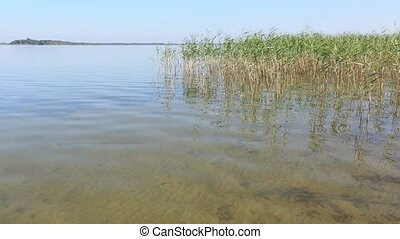 Summer Rushy Lake - Summer rushy lake view with limpid water...