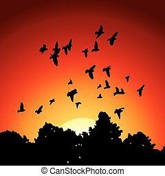 Vector image from black silhouettes of a flock of doves (Columba livia) flying over the trees on sunset background.
