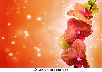 Orchid on orange - Orange orchid on orange backgorund. Photo...