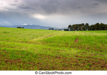 Green field with cloudy sky in the background