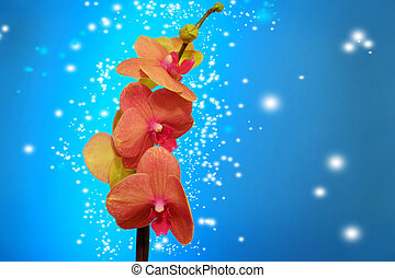 Orchid on blue - Orange orchid on blue backgorund. Photo...