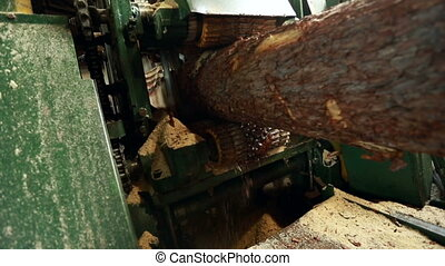 Close-up view of sawing log on machine - Sawmill. Close-up...