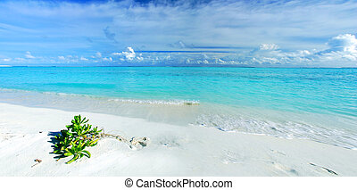Tropical paradise in Maldives with white beach, vegetation...