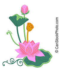 pink lotus and lotus leaf on the white background