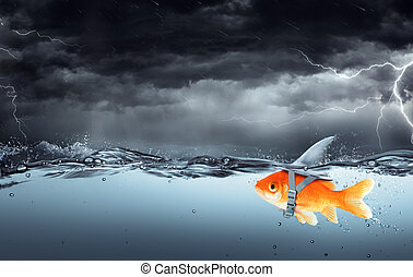 Small Fish With Ambitions Of A Big Shark Swimming In Tempest...