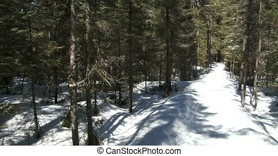 Snowy trail in Algonquin - Snowy and icy trail in winter in...