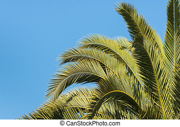 closeup of palm tree fronds against blue sky