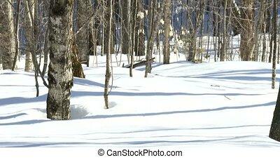 Stuffed fox on snow on a trail - Little stuffed fox resting...