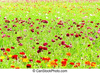 flowers field with green leaves