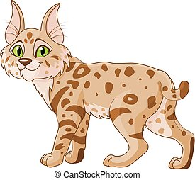 Bobcat - Illustration of cute bobcat