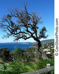 Bending tree and view of south of France and mediterrean sea...