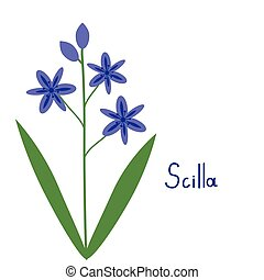 Scilla plant illustration - Vector simple scilla plant...