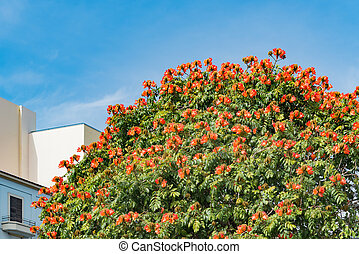 Bright orange blooms growing on rounded tree top - Bright...