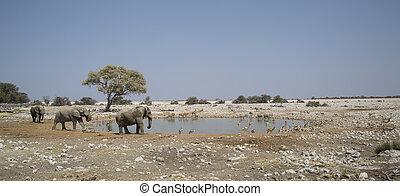 Elephant in Namibia