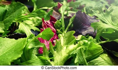 Fresh Mixed Leaf Salad Rotating - Fresh mixed-leaf salad...