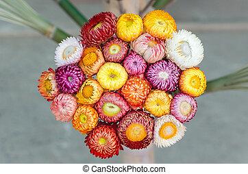 Everlasting flower or Strawflower - bouquet of Everlasting...