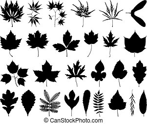 Leaves and foliage - File contains 27 elements for drawing...